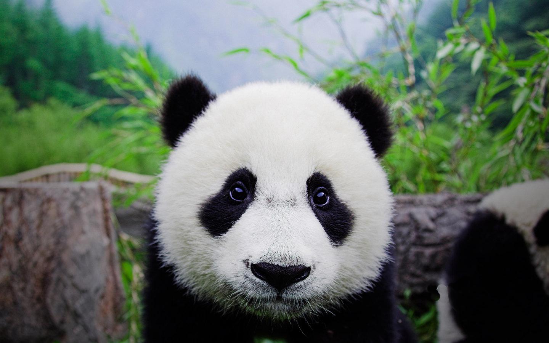 卧龙自然保护区 - 巴蜀文化